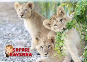 safari ravenna mirabilandia