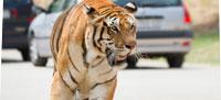 tigreHome
