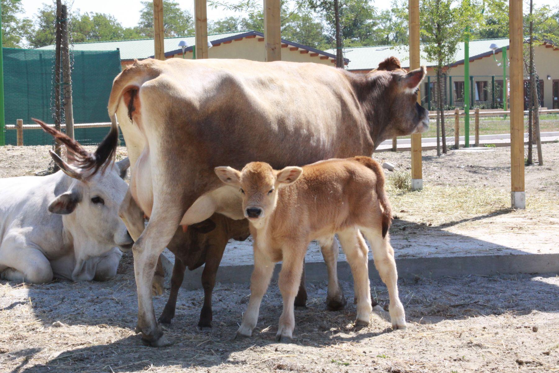 Zoo safari ravenna loc mirabilandia gli animali dello zoo for Rettili domestici