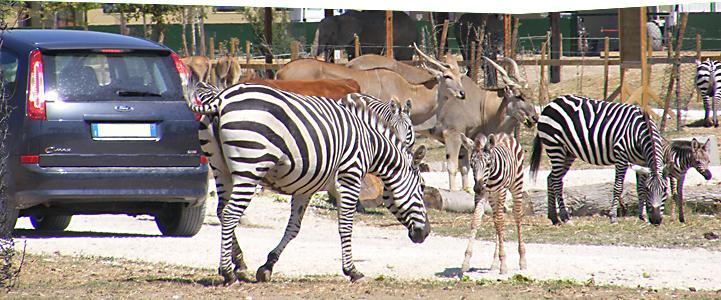 Maschera-safari-TOP