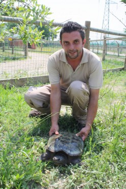 tartaruga azzannatrice safari_ravenna